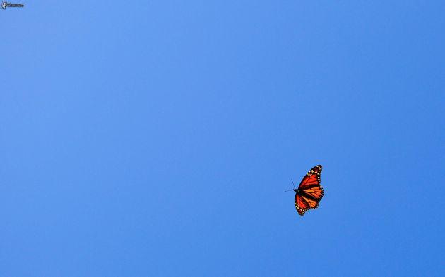 farfalla,-cielo-blu-239280
